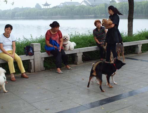 犬の品評会(?)も運河畔