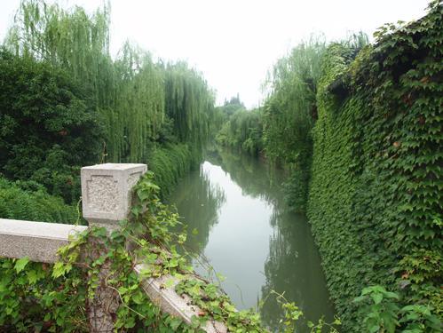 ツタや柳の緑に彩られた運河