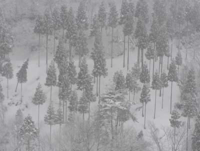 モノトーンの雪景色