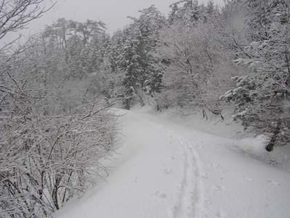 新雪の林道をひたすら辿る